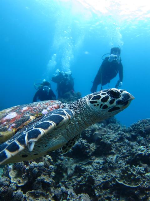 ウミガメ ダイビング