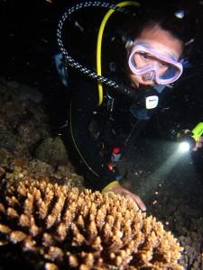 サンゴの産卵