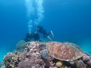 沖縄 ダイビング アオウミガメ 慶良間