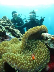 沖縄 ダイビング 慶良間 カクレクマノミ