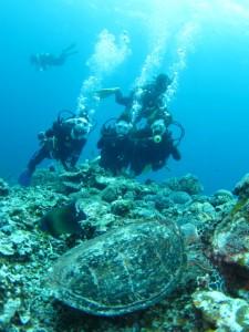 沖縄 ダイビング 慶良間 アオウミガメ