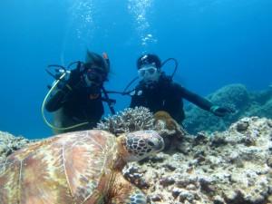 沖縄 ダイビング ウミガメ 慶良間