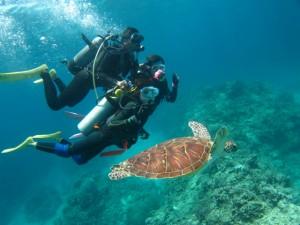沖縄 ダイビング 海亀