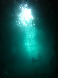 沖縄 ダイビング 青の洞窟 真栄田岬
