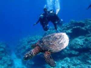沖縄 ダイビング 慶良間 ウミガメ