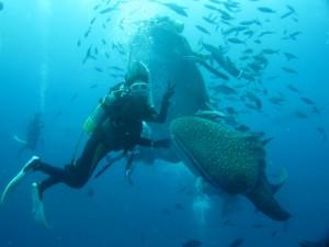 沖縄 ダイビング ジンベイザメ