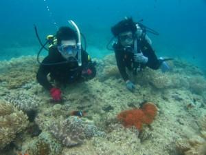 沖縄 ダイビング 体験 近海