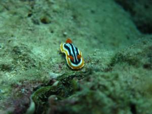 沖縄 ダイビング 近海