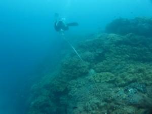 沖縄 ダイビング ニライ会 リーフチェック