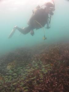 沖縄 ダイビング 那覇シーサイドパーク