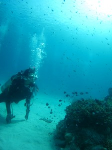 沖縄 ダイビング 慶良間