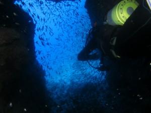 沖縄 ダイビング