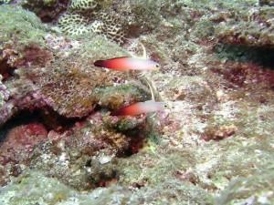 沖縄 ダイビング 自然観察
