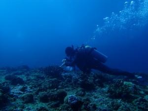 沖縄 ダイビング ドリフト 保全活動 ウチザン