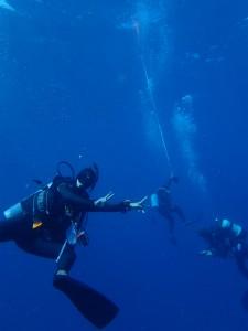 沖縄 ダイビング ドリフト 保全 ウチザン