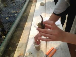 沖縄 サンゴ学習