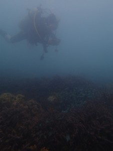 沖縄 ダイビング アドヴァンスドオープンウォーター 講習