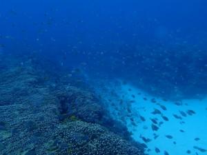 沖縄 ダイビング 万座 体験