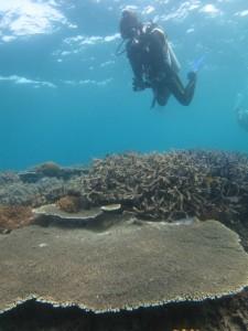 沖縄 ダイビング サンゴ礁