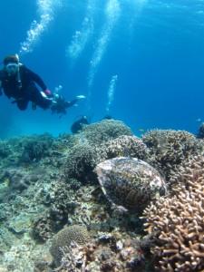 沖縄 ダイビング タイマイ