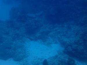 沖縄 ダイビング ライセンス オープンウォーター