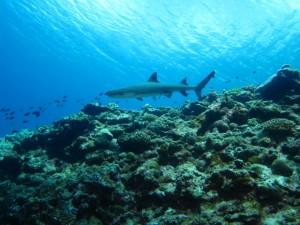 沖縄 ダイビング 慶良間 FUN 体験 シュノーケリング