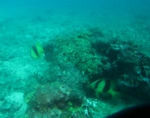 沖縄 ダイビング キハッソク
