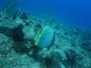 沖縄 ダイビング アカククリ