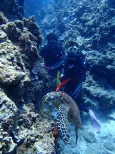 沖縄 ダイビング 慶良間 体験