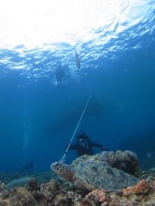 沖縄 ダイビング 慶良間 FUN 体験
