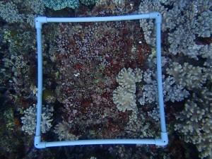 沖縄 ダイビング 砂辺 サンゴ