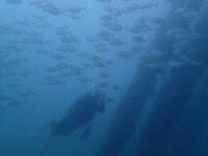 沖縄 ダイビング レッドビーチ