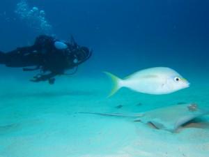 沖縄 ダイビング ヒトスジタマガシラ