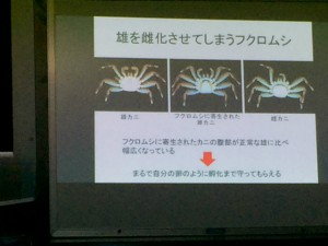 沖縄 ダイビング 海塾
