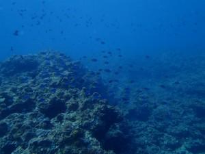 沖縄 ダイビング 漢那 東海岸 FUNダイビング