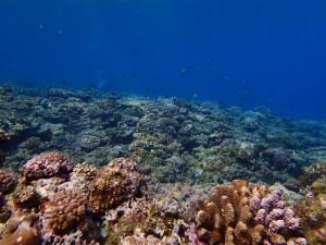 沖縄 ダイビング 慶良間 保全活動