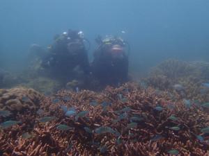 沖縄 ダイビング 那覇シーサイド 体験ダイビング