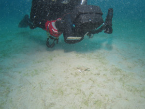 沖縄 ダイビング ウミテング