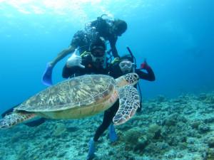 沖縄 体験ダイビング ウミガメと泳ごう