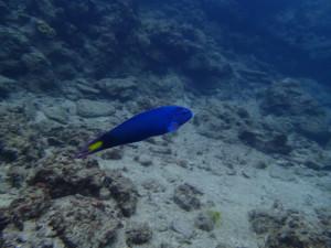 沖縄 ダイビング オトメベラ