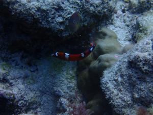 沖縄 ダイビング 慶良間保全活動