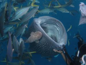沖縄 ダイビング ジンベエザメ 体験ダイビング