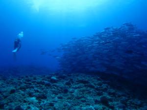 沖縄 ダイビング 粟国島