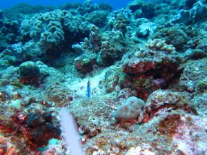 沖縄 ダイビング ハナヒゲウツボ