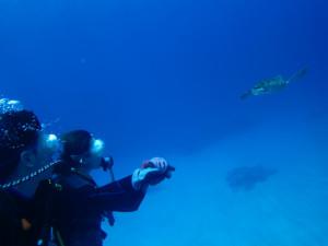 沖縄 体験ダイビング アオウミガメ
