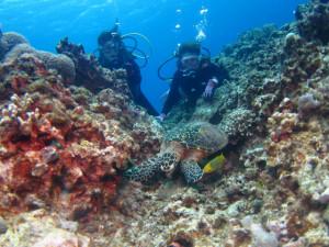 沖縄 体験ダイビング タイマイ