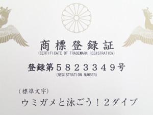 沖縄 ダイビング 慶良間体験ダイビング ウミガメと泳ごう!2ダイブ