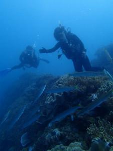 沖縄 ダイビング FUNダイビング 砂辺