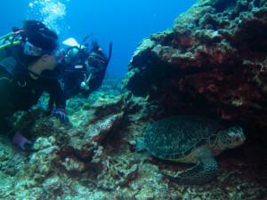 慶良間 体験ダイビング 海亀
