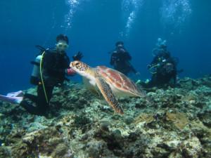 沖縄 体験ダイビング ウミガメ